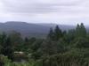 Mount Tomah Gardens
