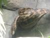 dscf3302-scrub-python